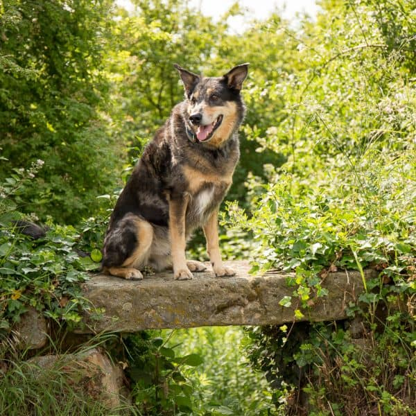Ares auf der Brücke